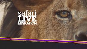 Safari Live: Migration thumbnail