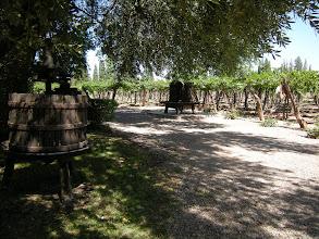 Photo: メンドーサ http://parajunko.blog.fc2.com/blog-entry-82.html