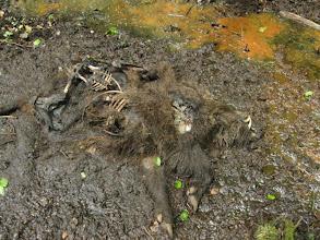 Photo: Tyle pozostało z dzika. I trudny do zapomnienia jego zapach