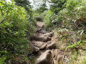 石の多い道