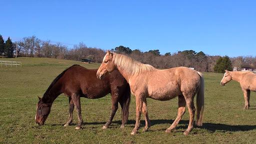 pension pré chevaux Gers