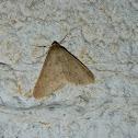 Anania moth