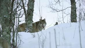 Siberia's Frozen Heart thumbnail