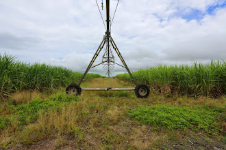 Photo: Sugar field