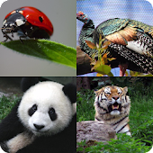 Guess The Zoo Animals 2
