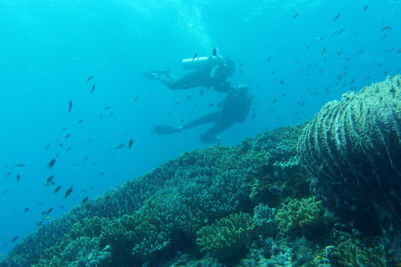 Diving in Raja Ampat will spoil you.