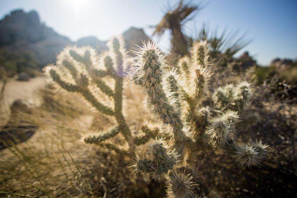 skinny cactus