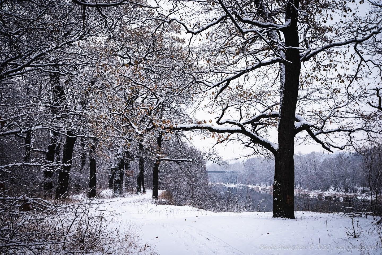 Лисичанський зимовий ліс
