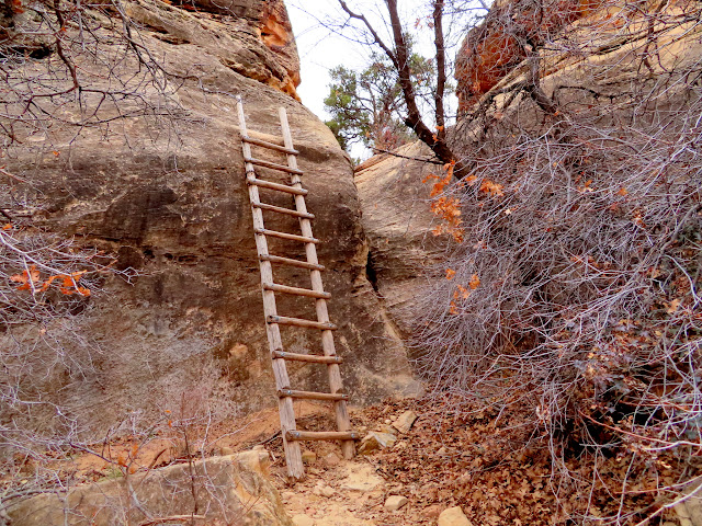 Ladder on the Cave Spring trail