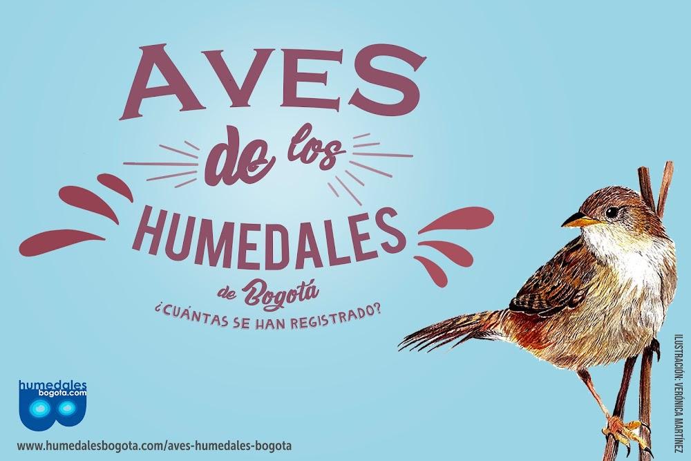 Aves de los humedales de Bogotá