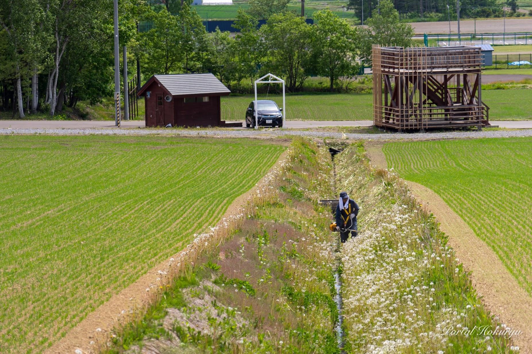ひまわりの里の草刈り