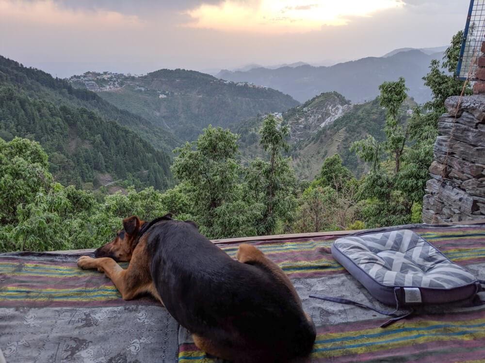 trekking+in+dharamshala+kangra+valley+waterfall+dharamkot+hike+himachal+pradesh.jpg