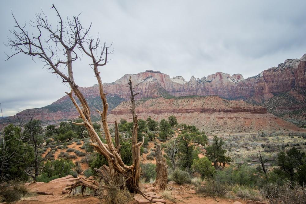 Zion top of Watchman Hike