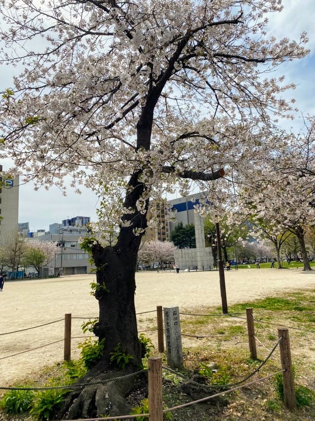2021年3月・冷泉公園の桜