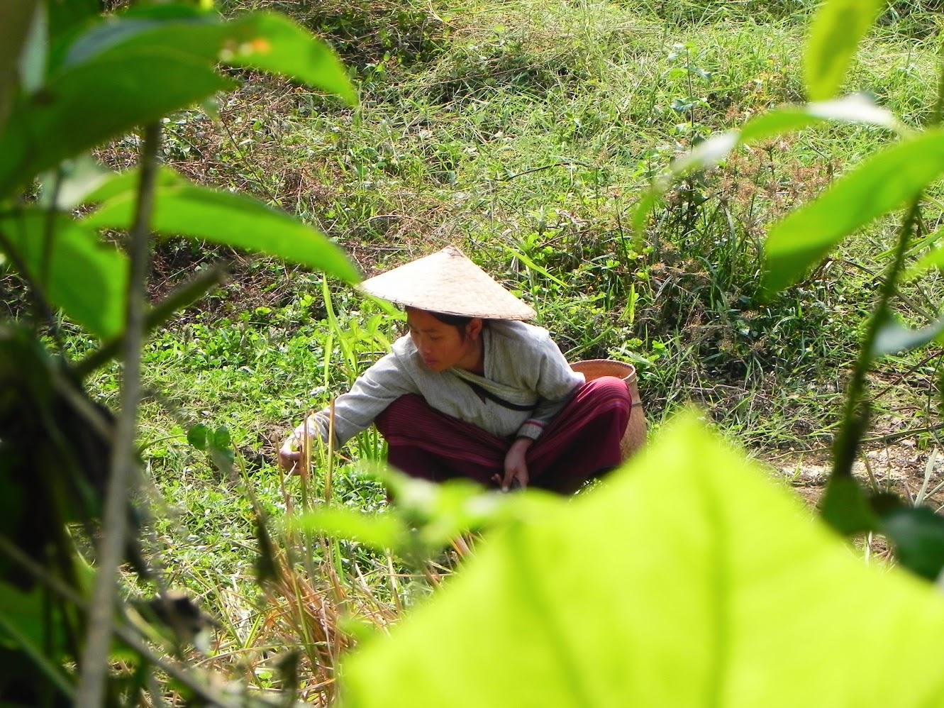 que ver y hacer en laos
