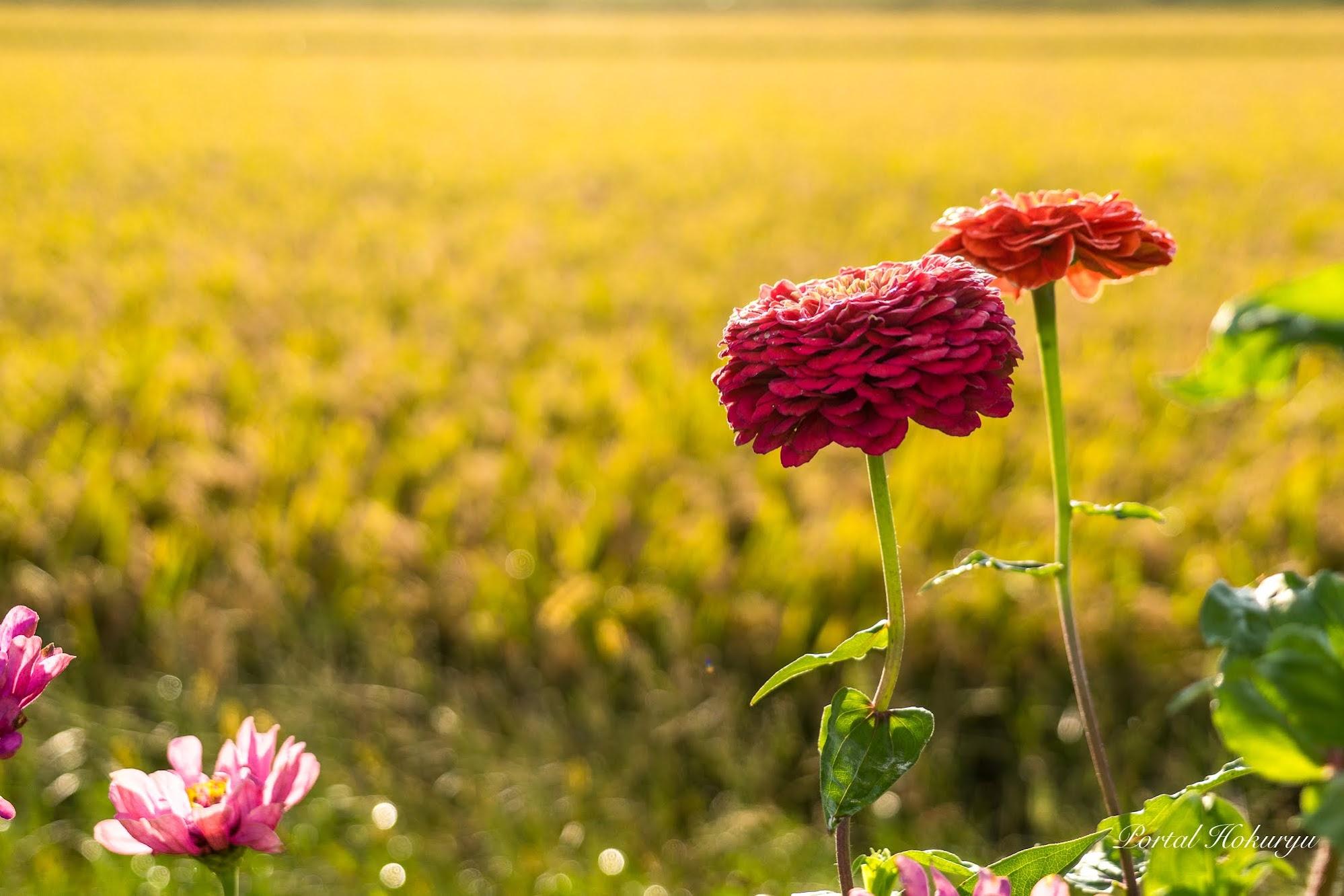 寄り添う赤い花
