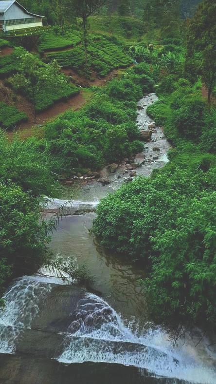 Nanu oya Water Falls