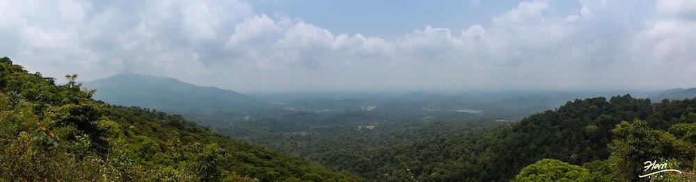 view of Tadiandamol Hills madikeri coorg.jpg