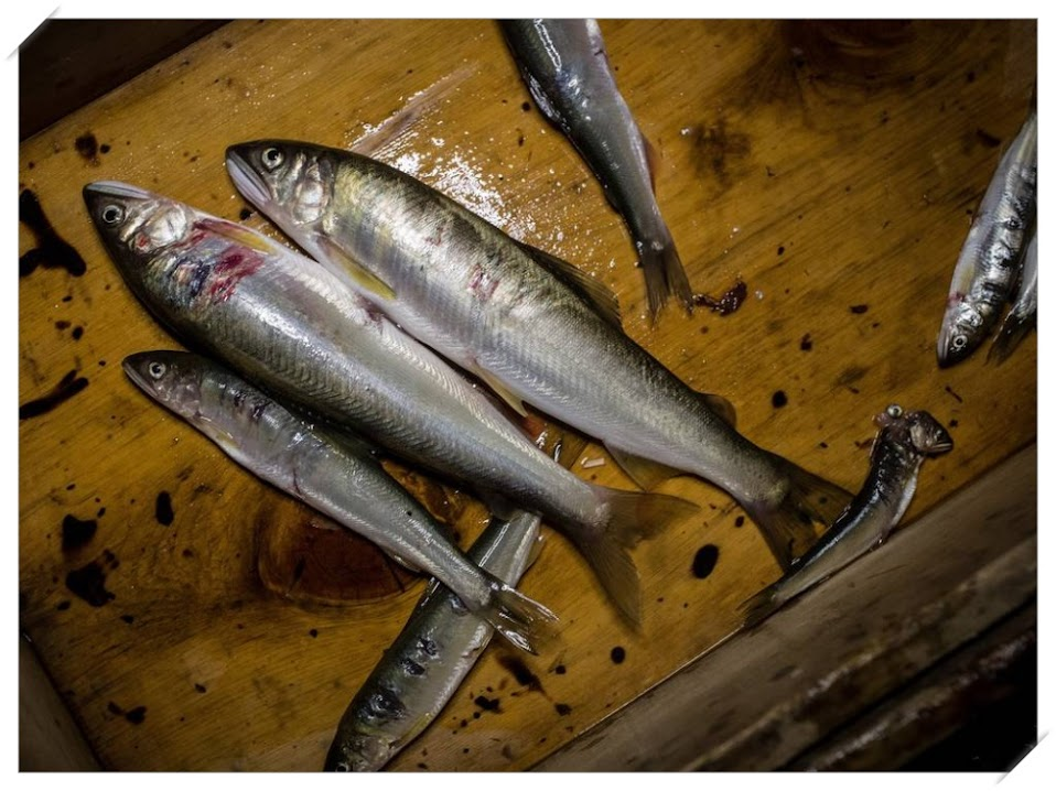 Ukai, a arte japonesa de pesca com aves