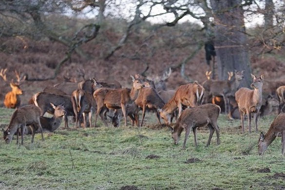 Deer park to reopen with strict no dogs' policy