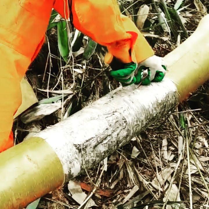 道つけの過程で発生する#支障木 の白樺から、樹皮をいただきました(2020年7月29日)