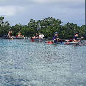 Clear Bottom Mangrove & Iguana Island Tour