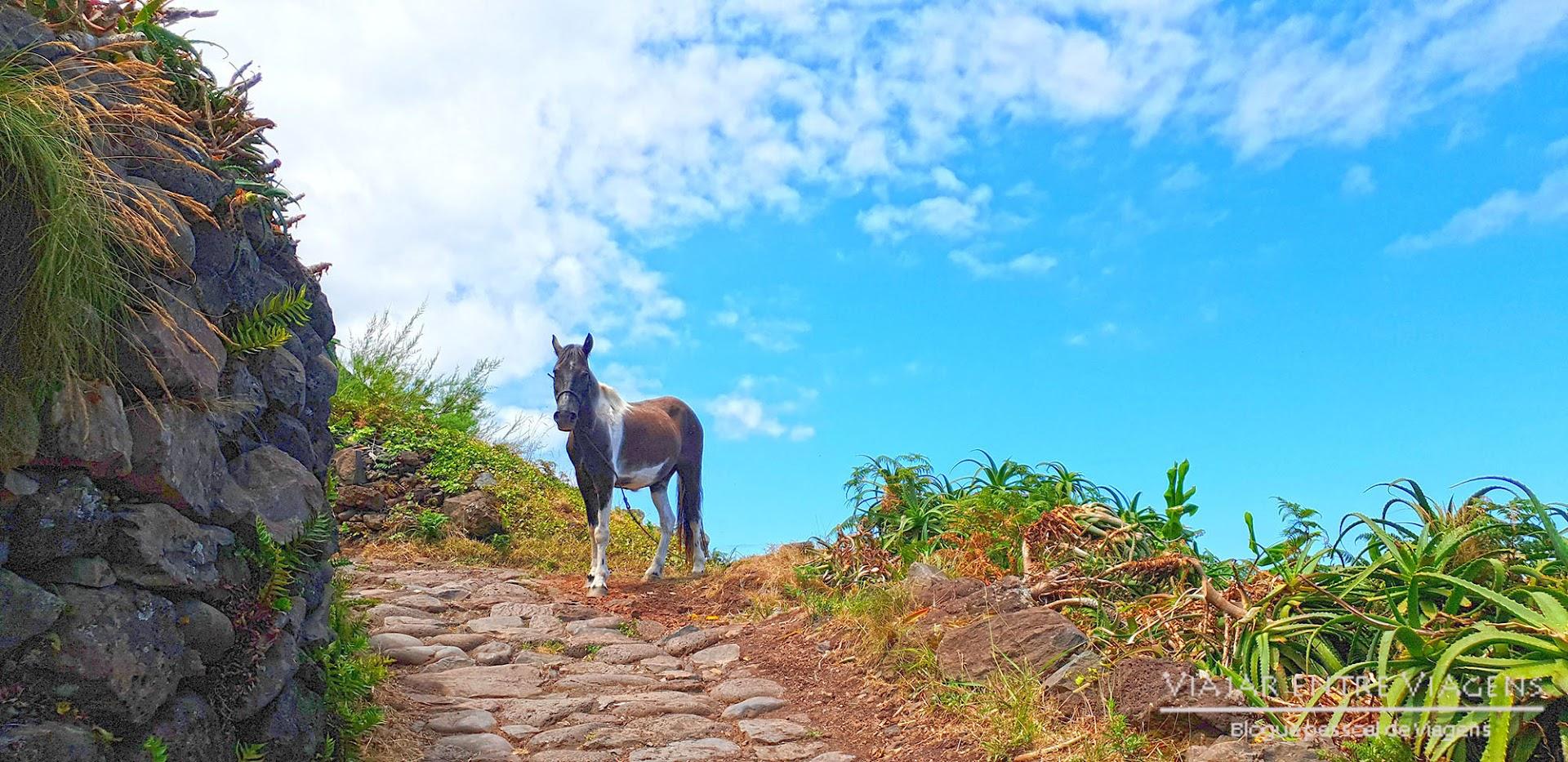 TRILHO DA FAJÃ DA CALDEIRA DE SANTO CRISTO - PR01 SJO - Da Serra do Topo à Fajã dos Cubres, uma aventura a não perder em São Jorge, nos Açores