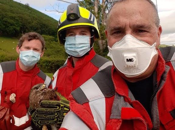 Firefighters rescue Brian the Buzzard