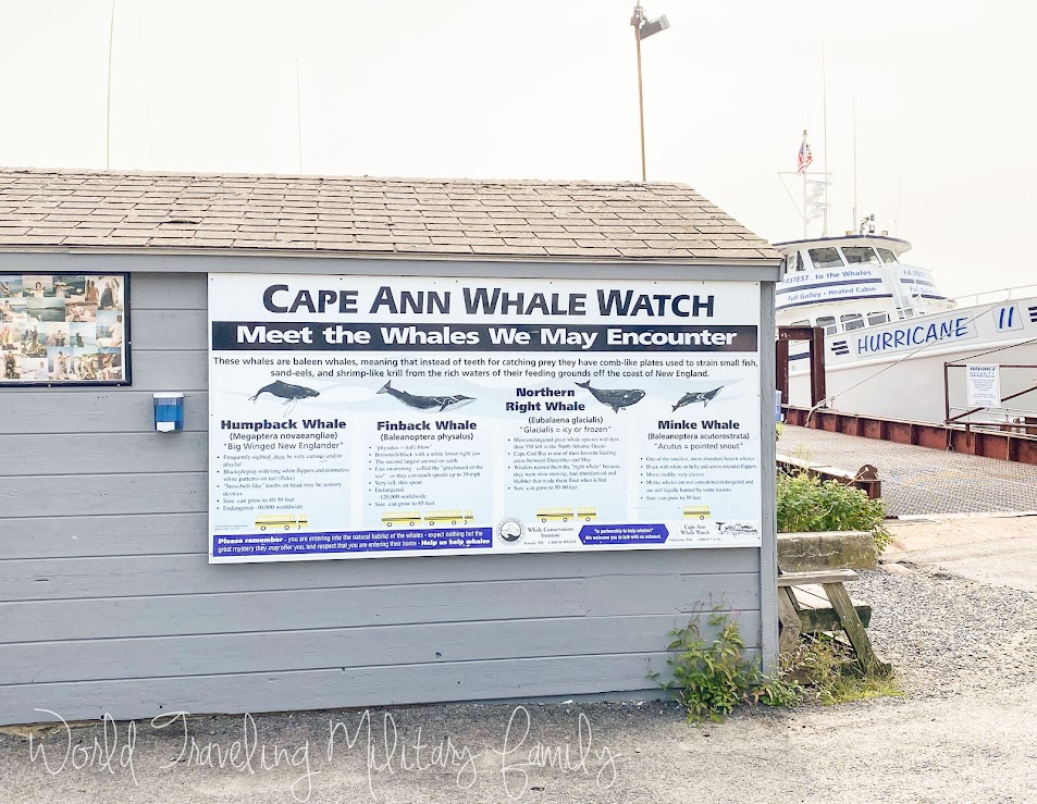 Cape Ann whale watch whales sign