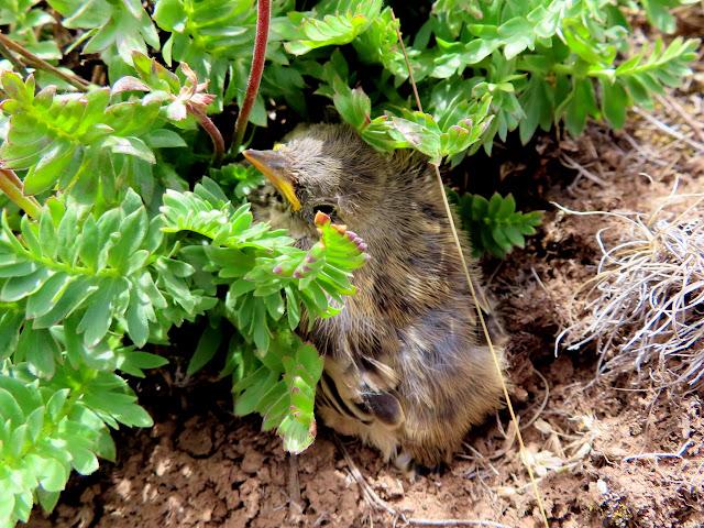 Baby bird far from any trees