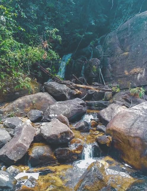Kanneliya Rain Forest