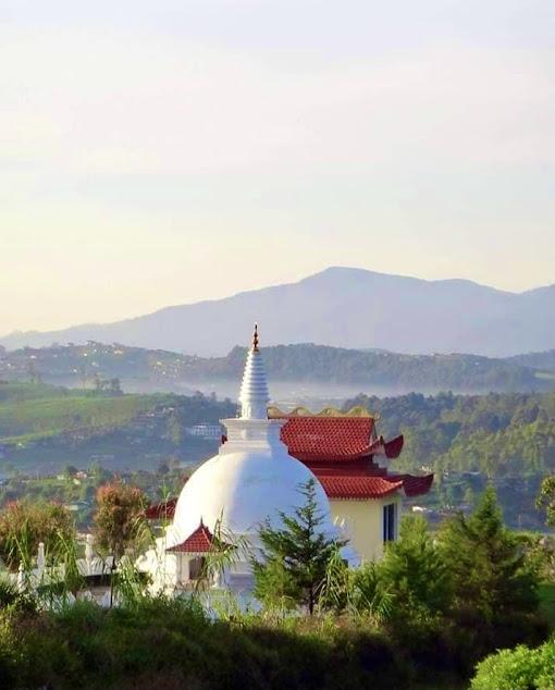 Single tree hill temple