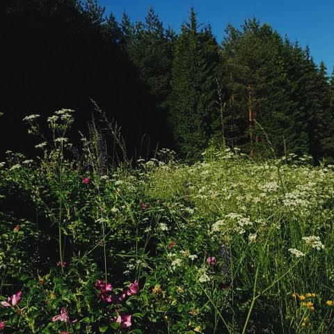 Gamta birželį