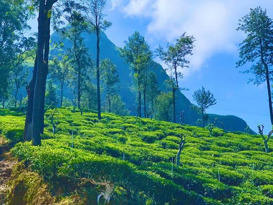 Narangala Mountain Badulla
