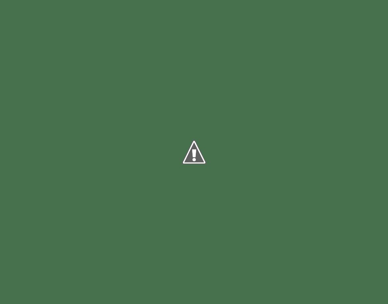 German shepherd puppy using the extreme weather Hale Pet Door for Walls