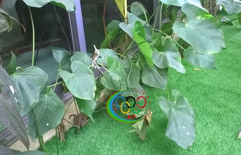 Cỏ nhân tạo của cỏ giá rẻ PAP chuyên thiết kế nội ngoại thất