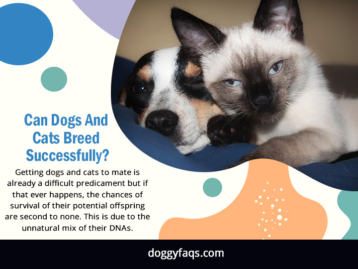 Can Dogs And Cats Breed Successfully