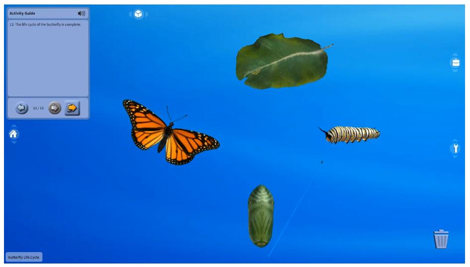 나비 수명주기