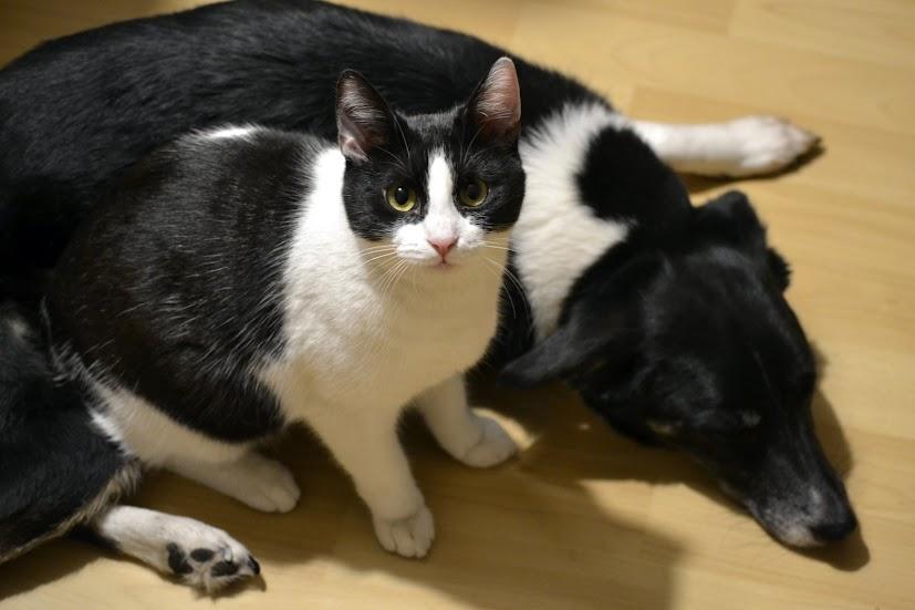 Mačička Máša