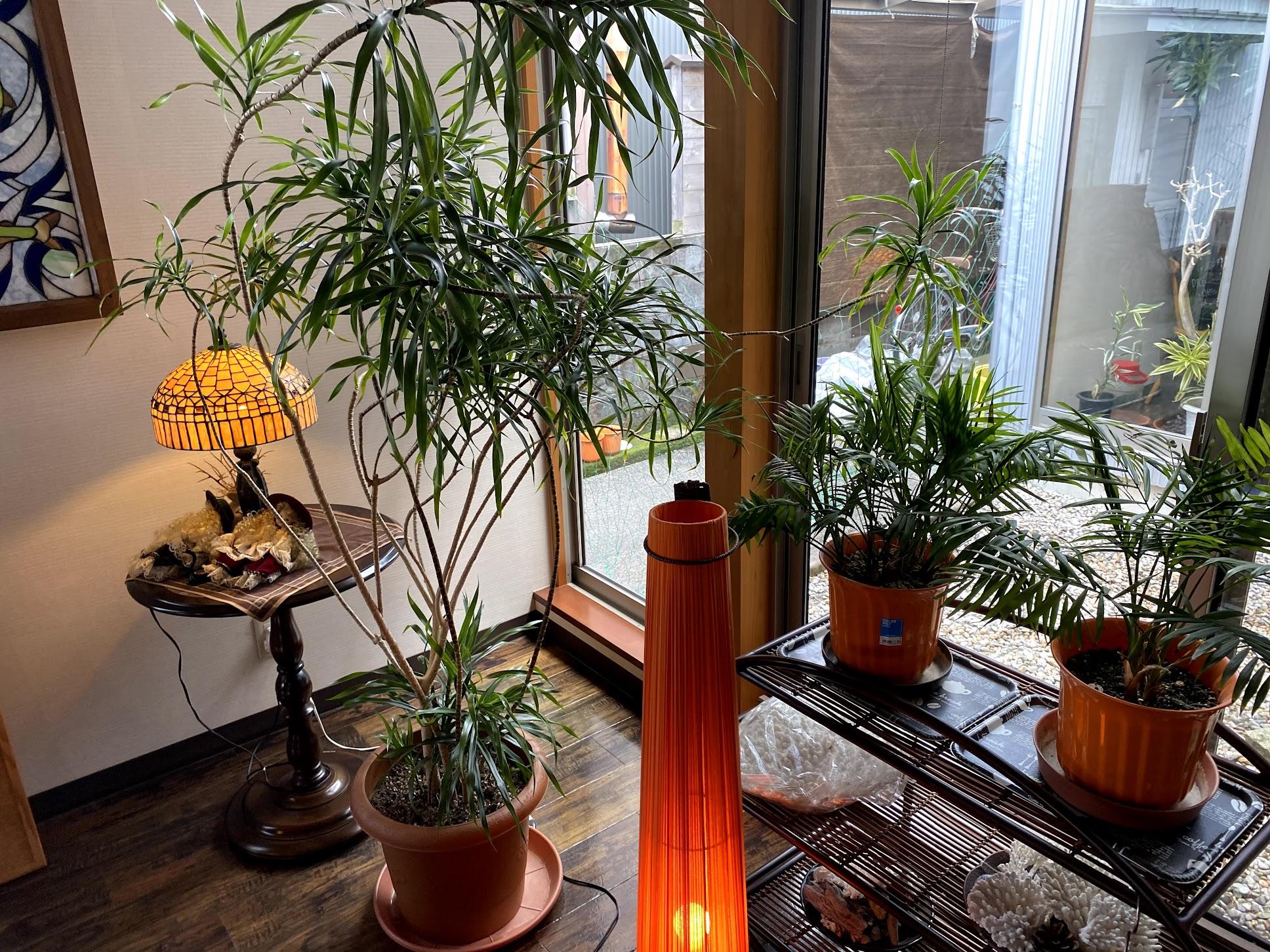 味覚 店内の様子 植物