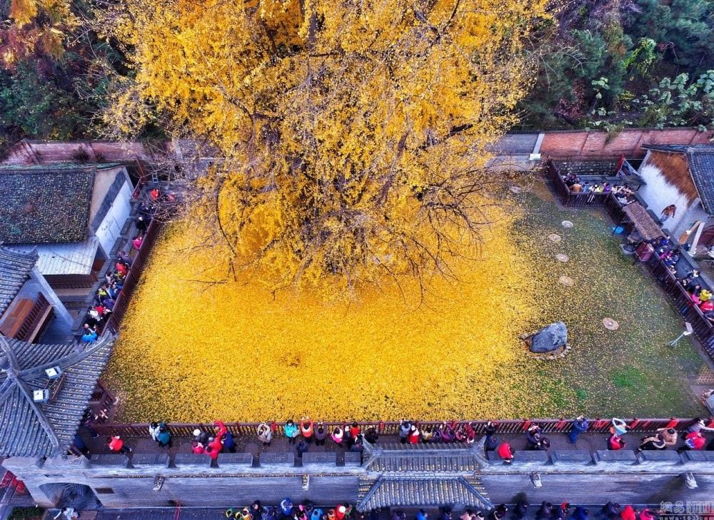 A chuva de ouro no templo Gu Guanyin