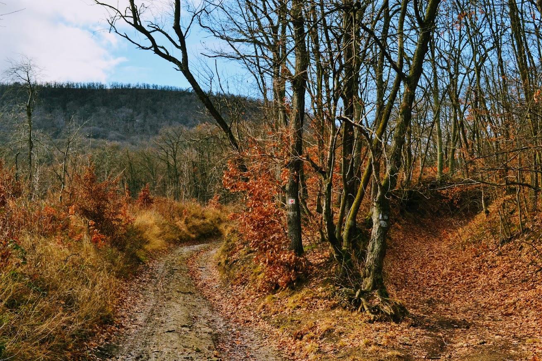 Vörös-kő elágazás, Visegrádi-hegység