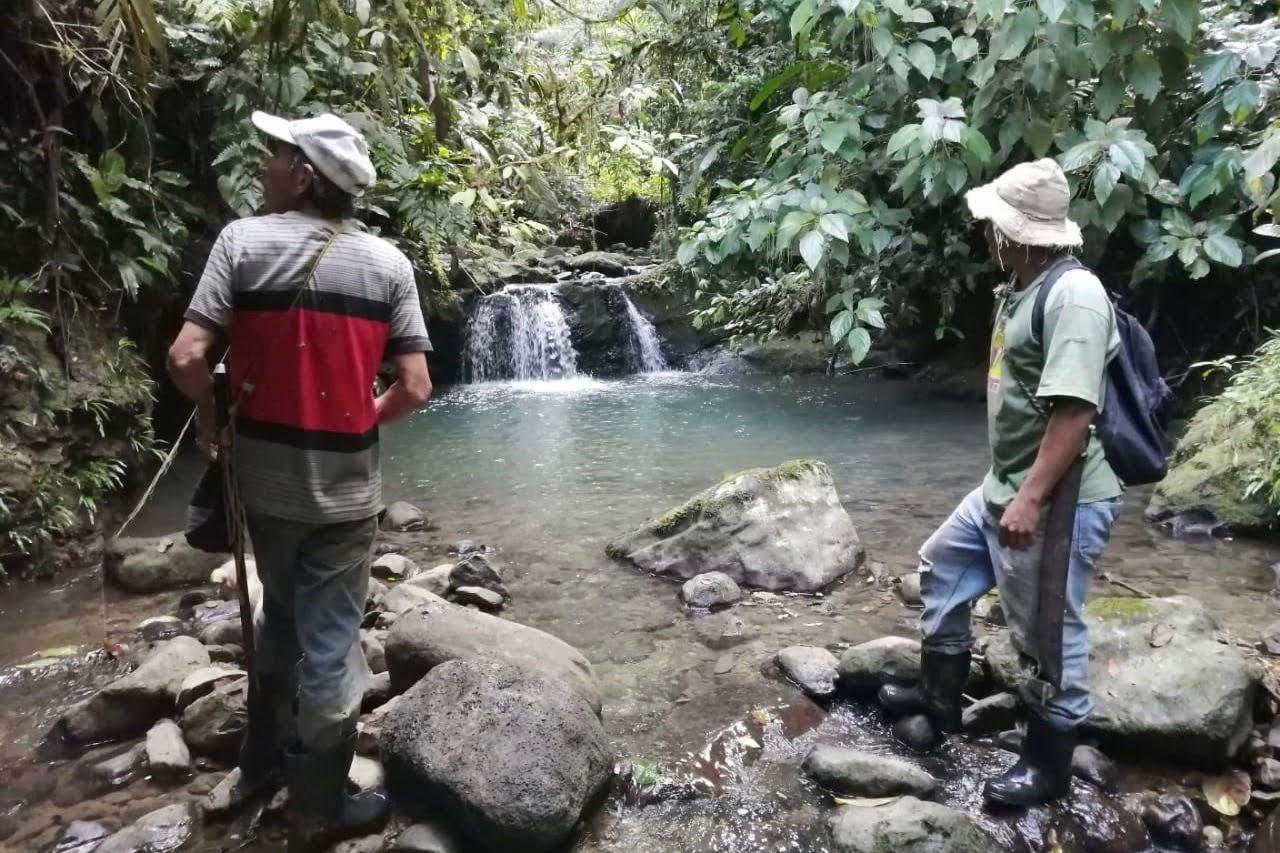 regenwoud-costa-rica