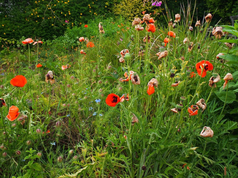jardin à Quimper