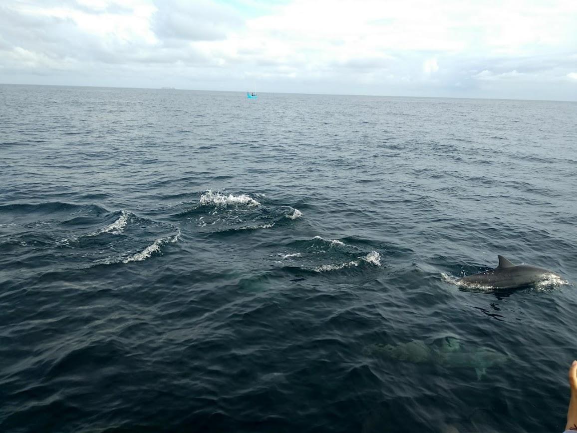 Wisata Lumba-lumba, Sabang
