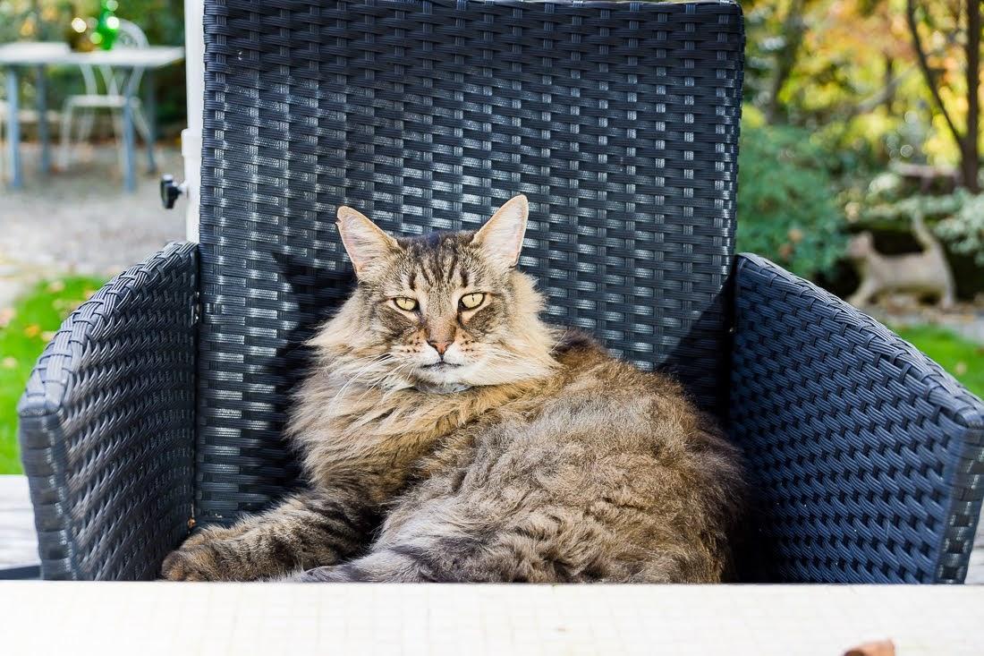 Французские котики ждут результатов выборов в US