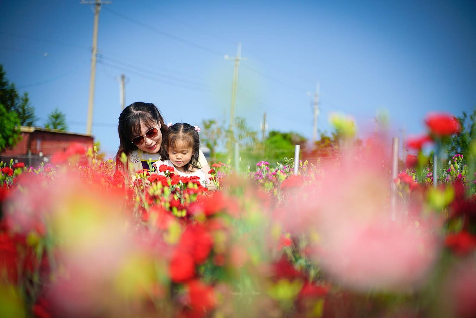 【旅遊】彰化田尾  春日浪漫的康乃馨花田 2020年最特別的母親節回憶