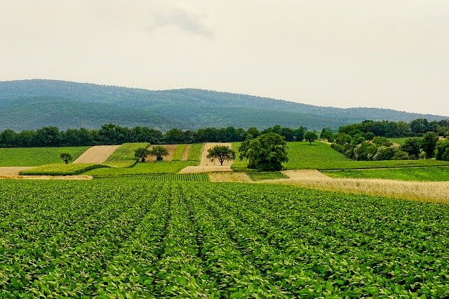 In arrivo una call per progetti di ricerca sull'agricoltura circolare