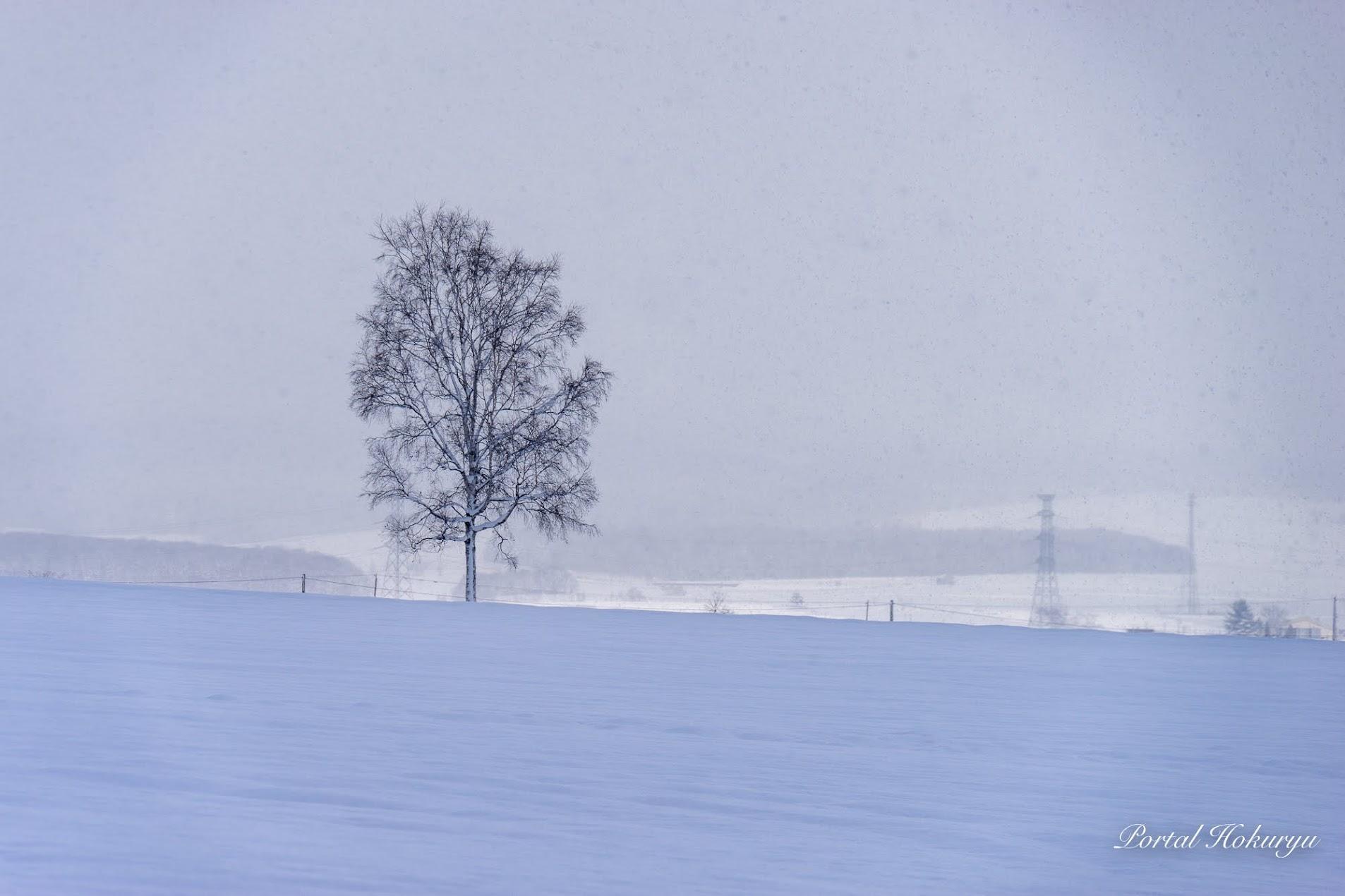 毅然と佇む一本の木