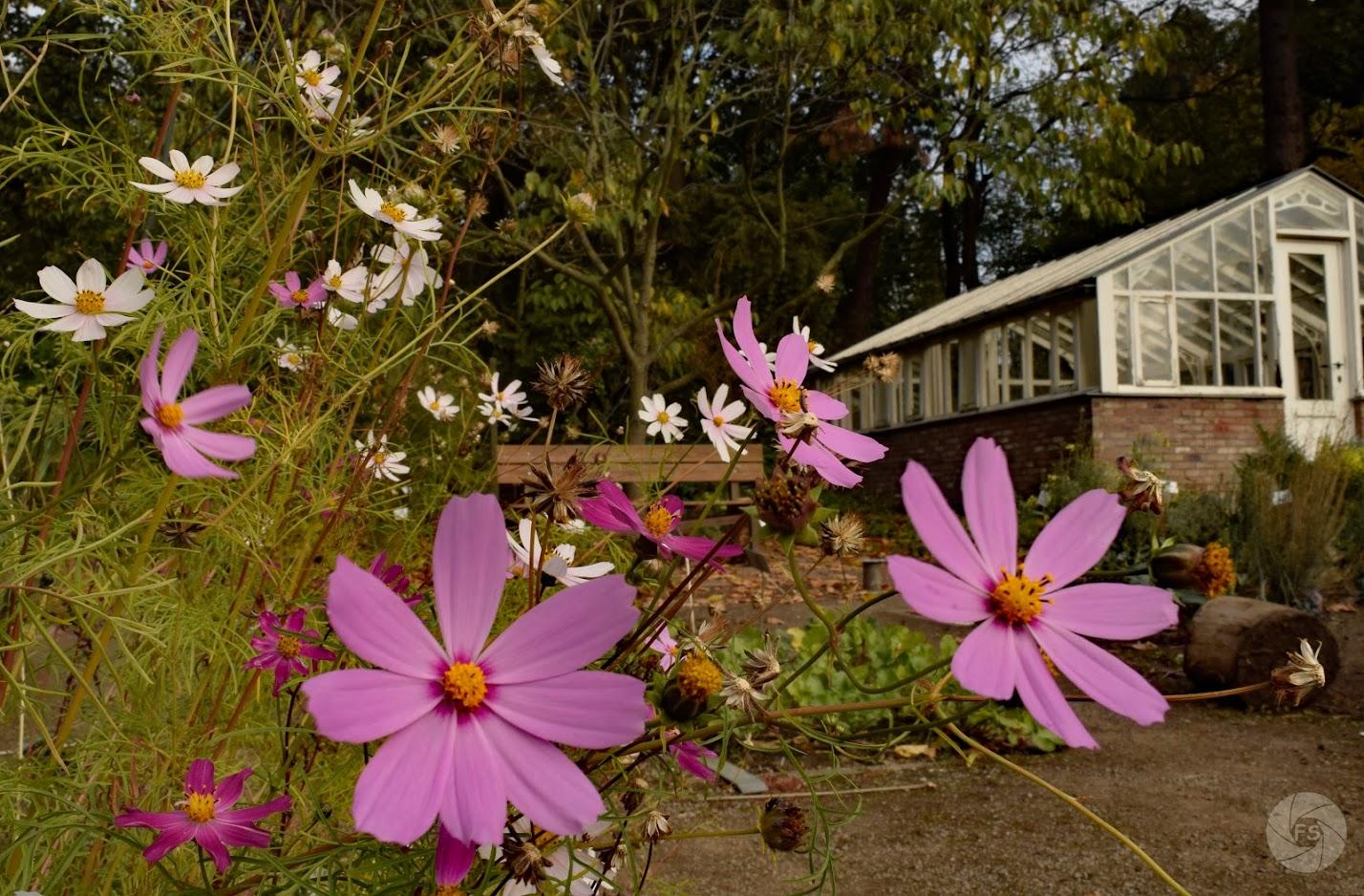 Afbeelding met buiten, plant, bloem, gras  Automatisch gegenereerde beschrijving
